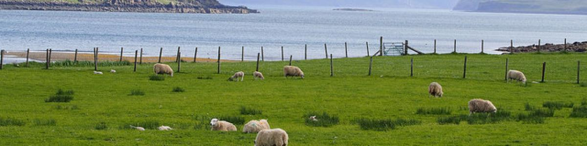 moutons campagne